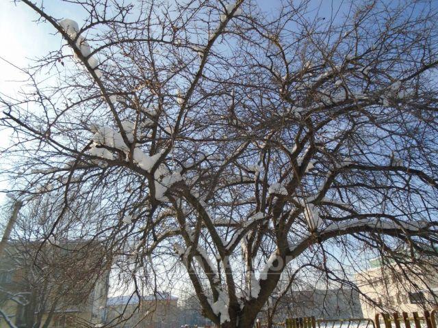 Очаква се февруари да бъде топъл, но с валежи
