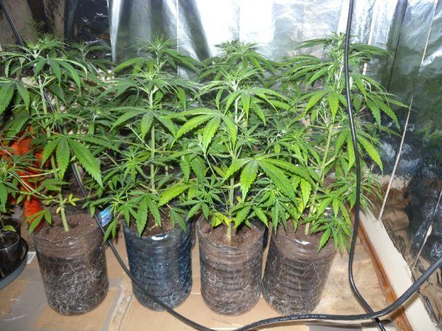Акция наркотици в радомирско. Ето какво откриха полицаите