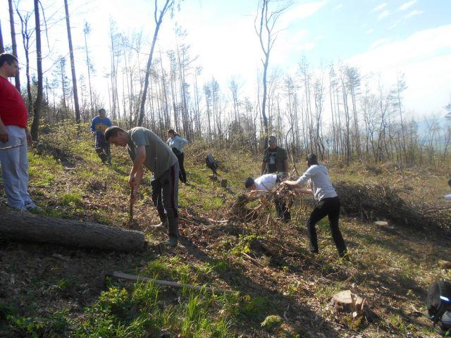 Перничани ще имат възможност да садят дървета
