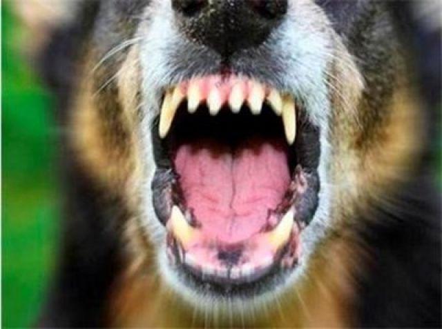 Куче нахапа жена. Тя съди собственика му