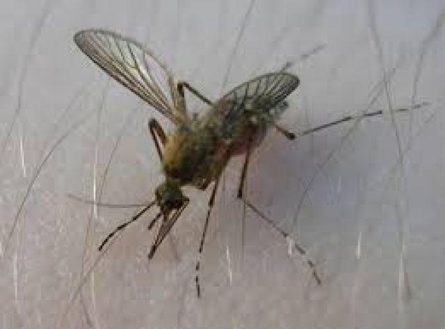 Регистриран е първи случай на Западнонилска треска в България за тази година