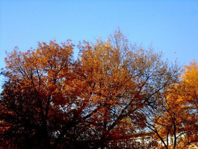 Ето какво ще бъде времето през ноември