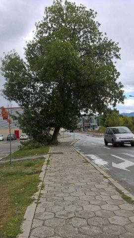 Бурята потроши клони на дървета