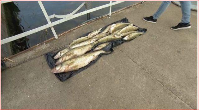 Умряла риба в язовир, в пернишко