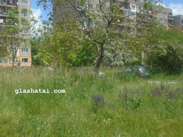 """Избуяла трева мъчи жителите на Изток и Мошино. Кметът: """"За два дни окосихме 100 декара"""""""
