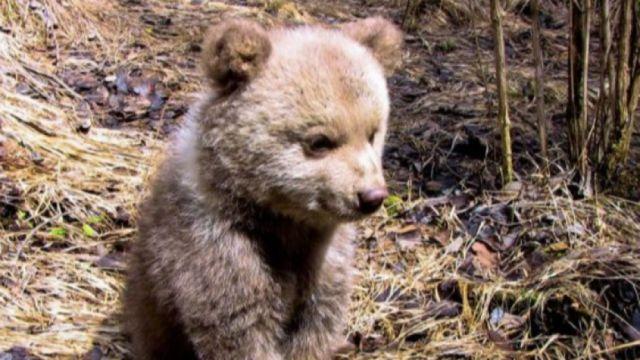 Който го е стах от мечки да не ходи в гората и да внимава на Витоша