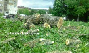 Отрязани дървета са оставени да гният /снимки/