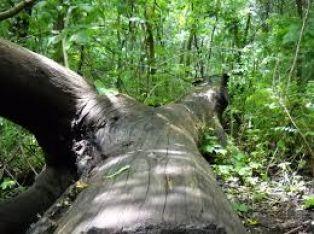 Не с телата си, с главите трябва да браним и  ...не само дърветата