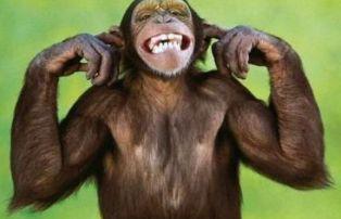 Маймуните и хората се усмихват по еднакъв начин