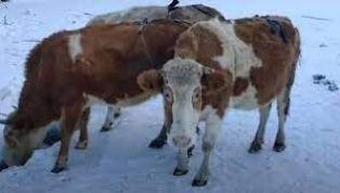 Спасиха бедстващи животни в радомирско