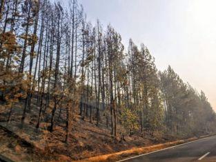 Нови 20 декара гора изгоряха в трънско