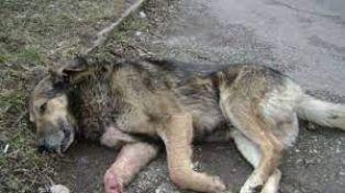 В Трънско разследват смъртта на куче