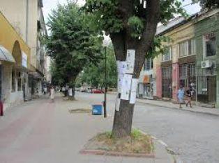От афиши и обяви дървесата ги боли, общински съветник пита за това