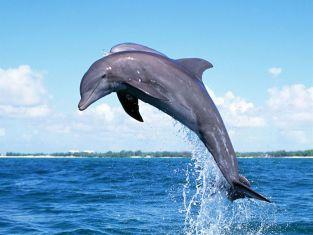 Делфин скочи в лодка и нарани жена
