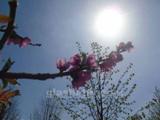 Пролетта настъпва днес