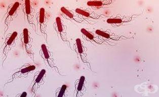 Какво представлява откритата във водата Ешерихия коли и какви са последиците при заразяването с нея