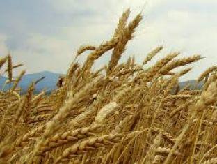 Пожарната с мерки за опазване на жътвената реколта