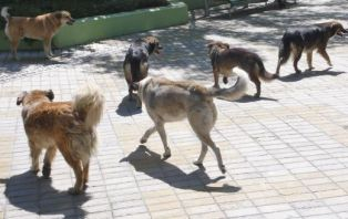 Млада жена пострада сериозно от глутница кучета