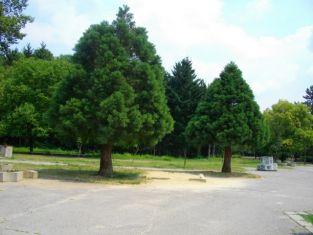 За шеста поредна година конкурс ще търси най-значимото живо дърво у нас