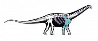 Намериха кост от най-големия динозавър в Трънско
