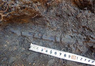 Учени откриха интересни неща край Трън