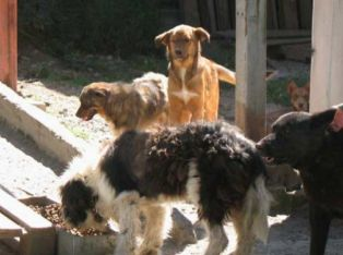 Страшно! Глутница кучета напада хора в Мошино