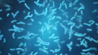 Опасна бактерия се разпространява в болниците в целия свят
