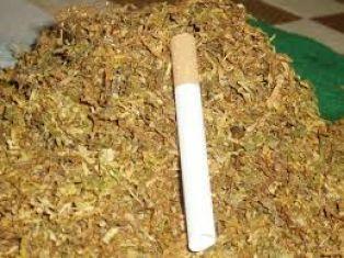 Иззеха голямо количество контрабанден тютюн в Трън