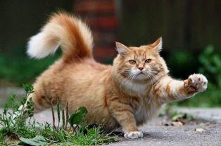 Котките разчитат повече на зрението, отколкото на обонянието си
